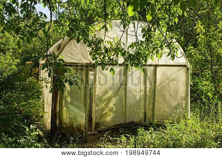 A small old greenhouse made of cellophane tape amidst greenery and vegetation in the garden