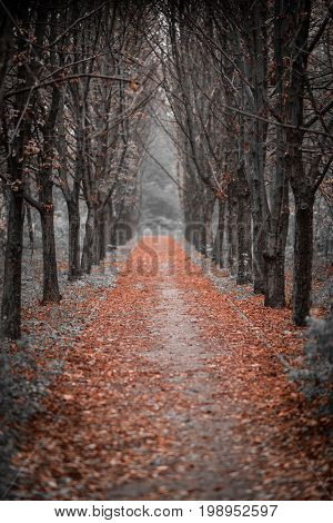 Gloomy avenue leading to a dead end