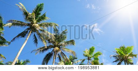 tropical palm trees against the blue sky and sun