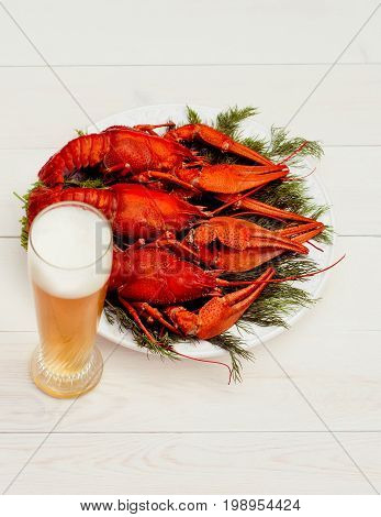 Boiled red crawfish on a white plate with green fennel on a white wooden background. Tasty red steamed rawfish closeup with glass of beer on wood table, seafood dinner, nobody.
