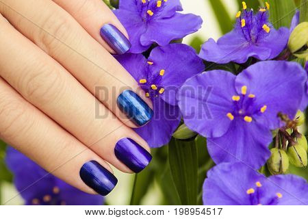 Colorful blue manicure with design on female hand close up.