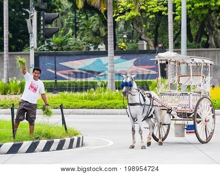 Manila - August 9 2017: Coachman finding food for his horse at the central reservation of Roxas Boulevard in Manila.