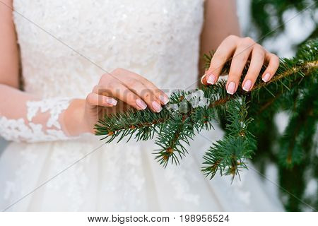 Bride's Hands Stroking The Green Spruce Branch. Winter Wedding. Outdoors