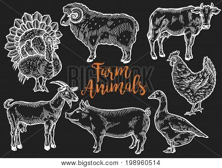 Farm Animal Set. Fresh Organic Meat. Cow, Goat, Pig, Turkey, Hen, Sheep, Goose, Duck. Hand Drawn Ske