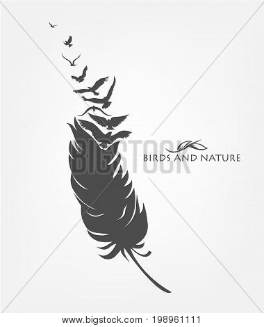 feathers with flying flock of fly birds