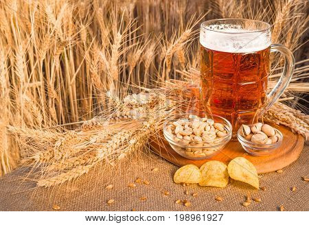 Beer and snacks pistachio nuts peanuts and potato chips a snack for beer lying in a glass dish surrounded by ingredients for making malt for beer. Spikes of wheat barley oats rye.