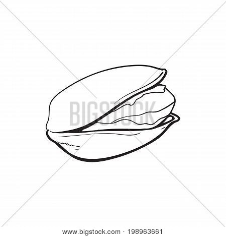 Single black and white pistachio nut, hand drawn sketch style vector illustration isolated on white background. Realistic hand drawing of pistachio nut, vegetarian snack