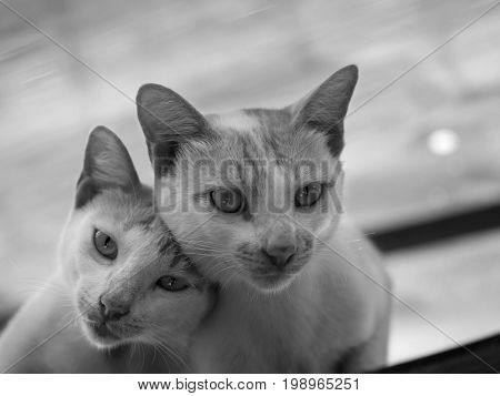 BLACK AND WHITE PHOTO OF COUPLE CAT LOOKING AT CAMERA