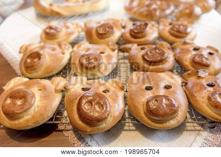 Lucky cakes with a pig's face lie on a baking tray