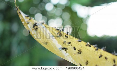 Sticky Paper Fly Catcher Tape with Green Bokeh Background