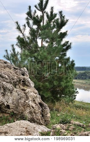 Landscape with mountains forest and a river in front. Beautiful scenery