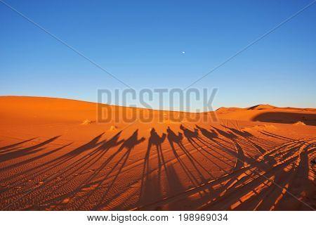 Silhouette Of Camel Caravan In Big Sand Dunes Of Sahara Desert,