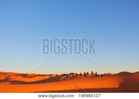 Caravan Going Through The Sand Dunes In The Sahara Desert