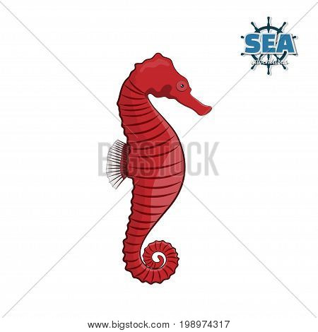 Sea horse on a white background in a cartoon style. Vector illustration