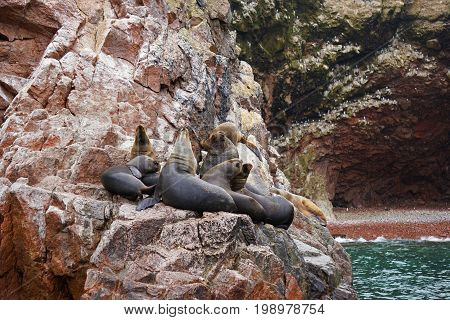 A group sea lions hang out on the rocky cliffs above the sea