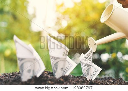 Hand hold watering planting dollar bill on soil .Concept economic growth color of vintage style