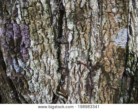 Detailed wood bark texture with cracks. Raw wood board surface. Rustic lumber close-up photo. Oak tree trunk peel with noise and grit. Natural wooden bark structure. Weathered tree bark closeup photo