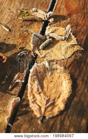 Leaves faded on wooden boards by weather of hoarfrost in winter.
