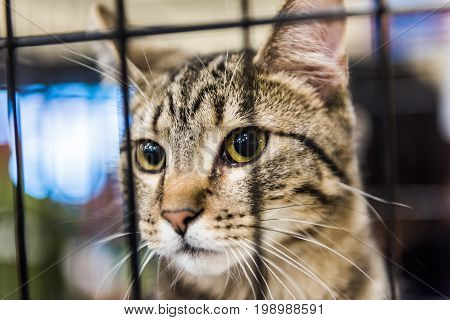 Closeup Of One Brown Tabby Cat In Cage With Green Eyes Waiting For Adoption