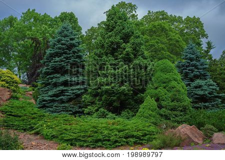 Collection of evergreen shrubbery.