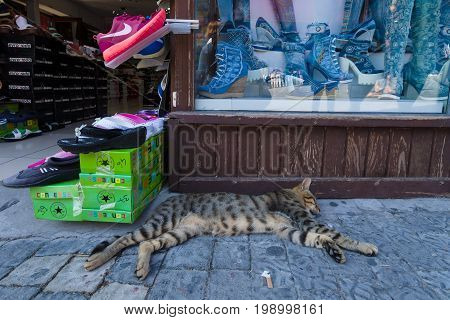 SIDE TURKEY - JULY 07 2015: Souvenir shop on the waterfront. The cat is lying in front of the store. Anatolian coast - a popular holiday destination in summer of European citizens.