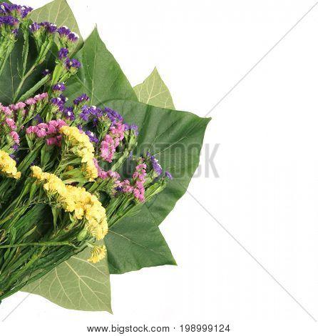 Limonium platyphyllum. Bouquet of dried flower. Tropical leaf. A leaf of a tree of Jacaranda