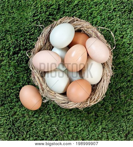 Organic raw eggs in different natural colors in nest egg on grass. Easter holiday background