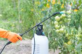 Spaying vegetables with water or plant protection products such as pesticides against diseases and pests poster