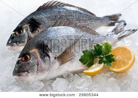 Gilthead (sparus Aurata) On Ice