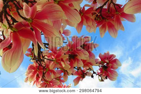 Natural Beauty Of Flowers In Pink Color