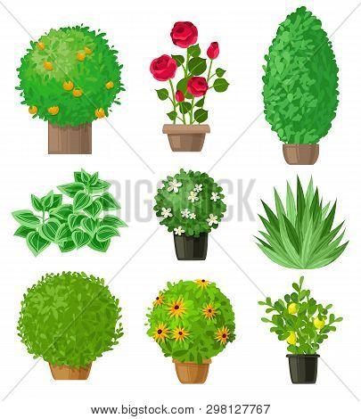 Garden Plants Set. Outdoor Garden Landscape Isolated Plants On A White Background. Set Of Nine Detai