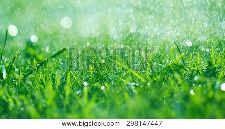 Grass with rain drops. Watering lawn. Rain. Blurred Grass Background With Water Drops closeup. Nature. Environment concep