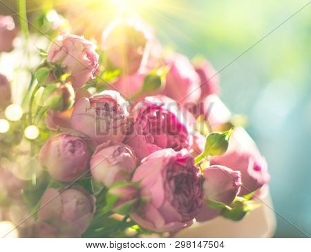 Pink Roses bouquet, blooming roses. Rose flowers bunch in sun light, nature. Holiday gift, Bunch of roses flower