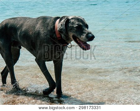 Sdot Yam Israel April 27, 2019 View Of Unknown Dog On The Beach Of Sdot Yam Kibbutz At The Haifa Dis