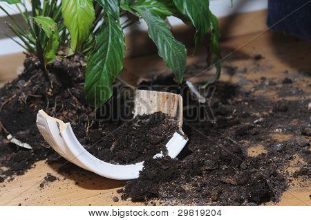 Broken Up Pot With Flower