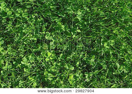 Fresh Spring Green Grass Texture