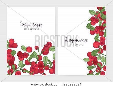 Bundle Of Flyer Or Poster Templates Decorated With Lingonberry Sprigs Hand Drawn On White Background