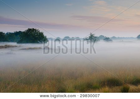 A foggy sunrise