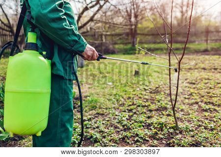 Senior Farmer Spraying Tree With Manual Pesticide Sprayer Against Insects In Spring Garden. Agricult