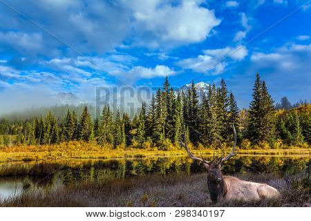 Gorgeous deer with horns resting on the lake. Rocky Mountains of Canada. Concept of ecological, active and photo-tourism