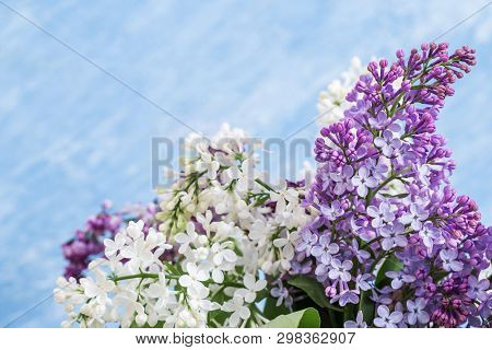 Branches Of Violet Lilac Flowers On Blue Sky Background. Natural Floral Fon Or Postcard. Spring Conc