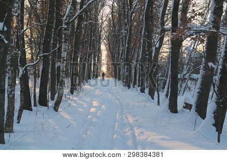 Cross Country Skiing At The Sunset. A Skier Walks Between Trees. The Sun Lights Snow And The Ski Tra