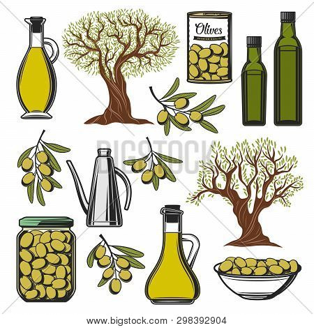 Green Olives And Olive Oil Icons. Vector Extra Virgin Olive Oil Bottle, Marinated Pickles In Glass J