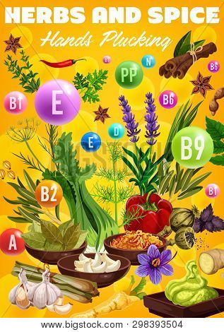 Spices, Cooking Flavoring Herbs And Herbal Seasonings Vitamins. Vector Healthy Multivitamin Culinary