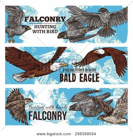 Falconry Hunting With Wild Birds Sketch Banners. Vector Eagles, Falcons And Predatory Vultures, Hawk