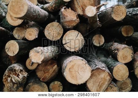 Wooden Natural Cut Logs Textured Background. Trees Cut Section For Background Texture. Stack Of Logs