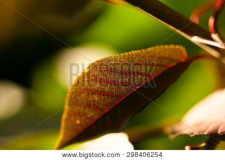 A Closeup Shot Of The Veins Of A Russet Colored Leaf With A Green Background.