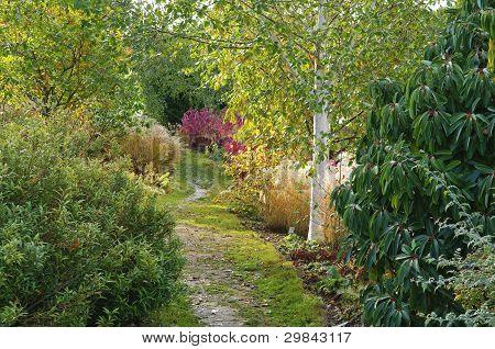 Woodland Garden In Essex