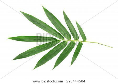 Bamboo Leaves Isolated On White Background.leaf (dendrocalamus Strictus Nees); Green Bamboo Leaves A