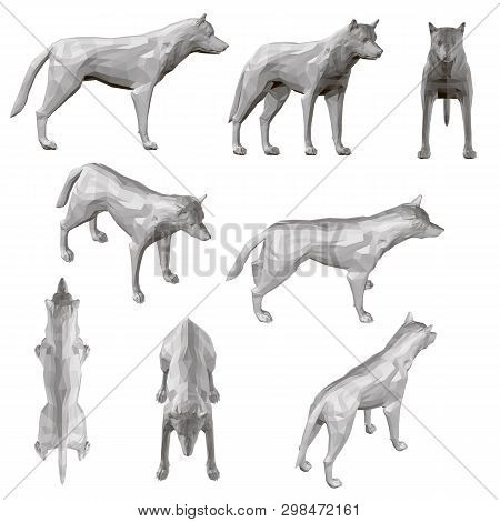 Set With Coyote In Different Positions. Polygonal Coyote In Gray. 3d. Vector Illustration
